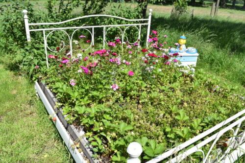 Bettbeet vor der FeWo-Küche mit Nelken, Thymian und Erdbeeren